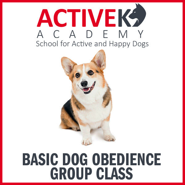 Basic Dog Obedience Group Class