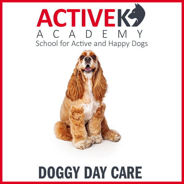 Product-DoggyDayCare