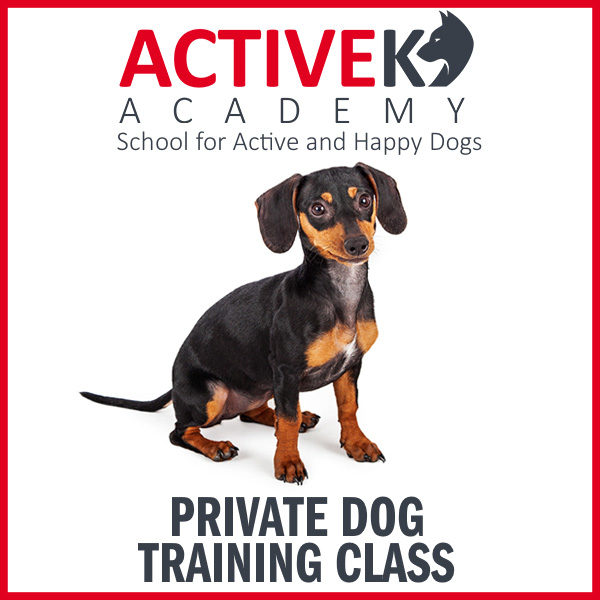 Private Dog Training Class