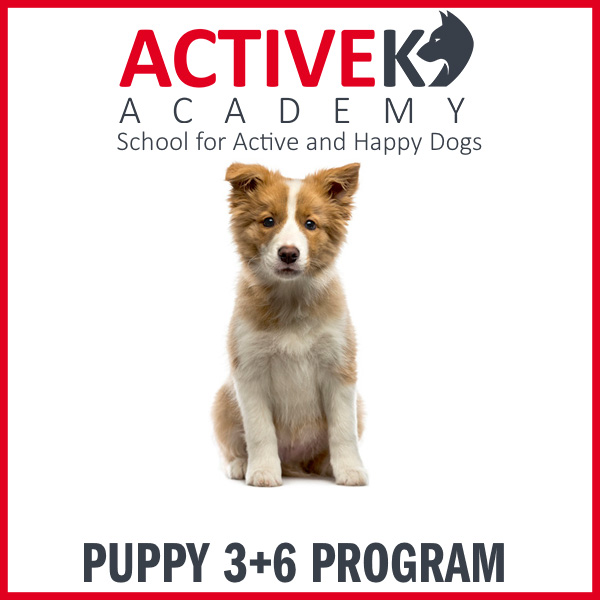 Product-Puppy3_6Class